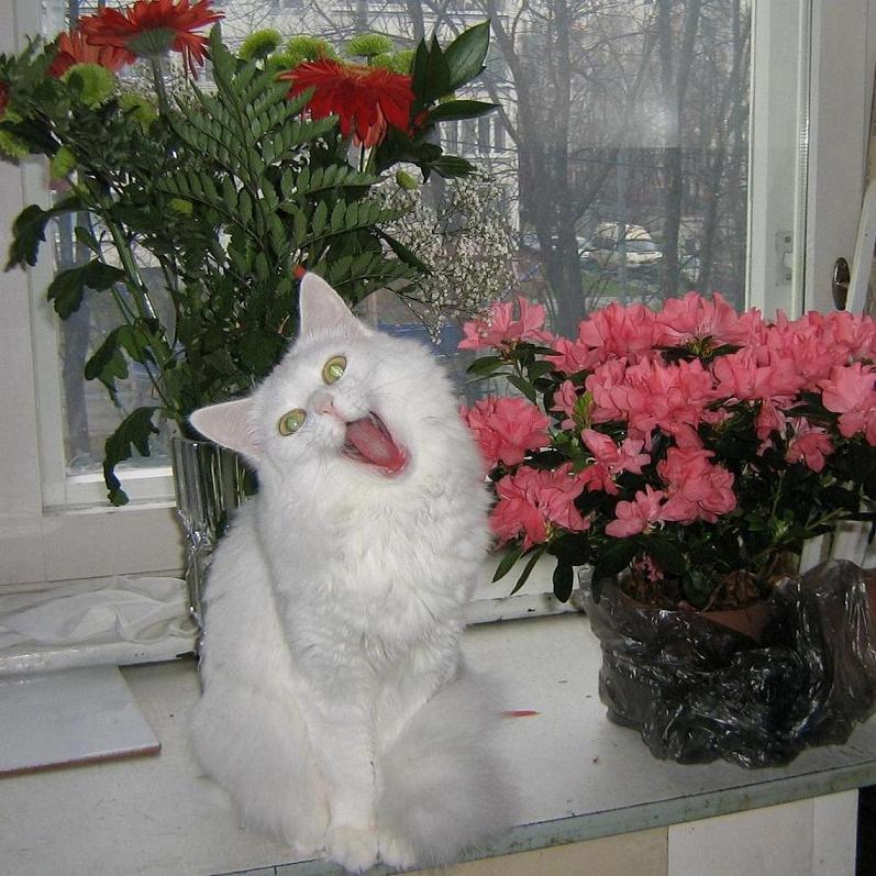 Елена -Бася