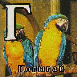 Чем старше попугай, тем ярче оперение