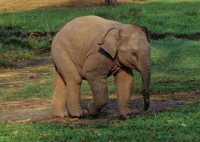 ~Слоненочек с зеркальцем~