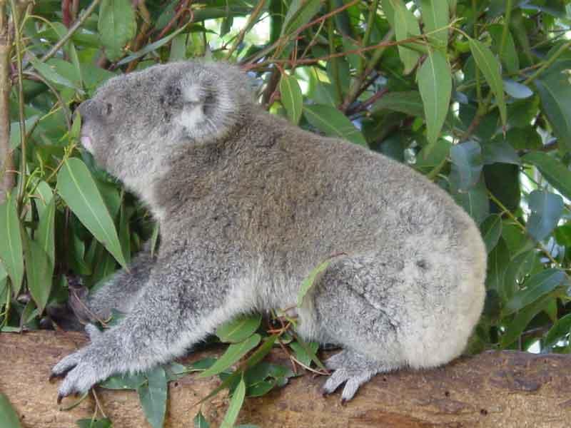 KoalaAtHome